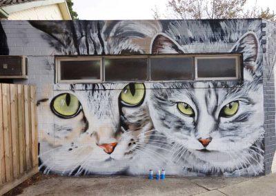 Knox_Vet_Cats